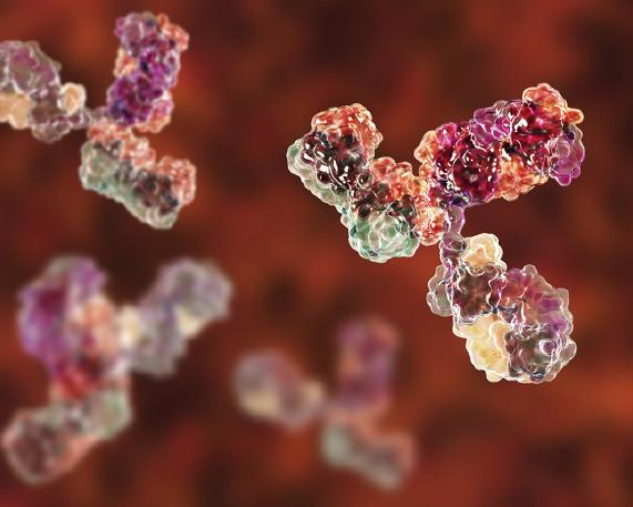 Immune System.